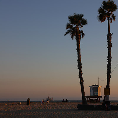 Nomadic Los Angeles - Palm Trees on the beach during a sunset