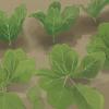 veggiefarm