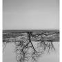 FA paul ulukpo upside down tree