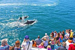 Whale Watching Trip